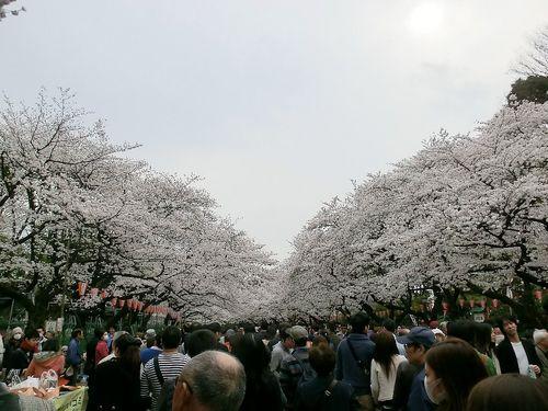 2013上野花見 (1).JPG
