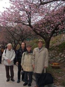河津桜を観る会.jpg